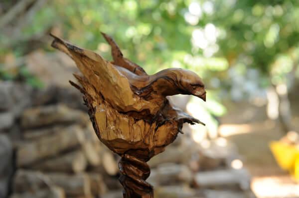 עוד ציפור מעץ זית